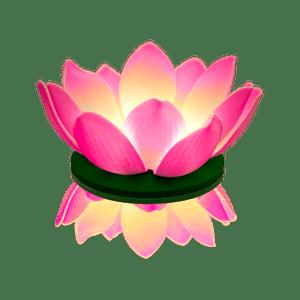 Nymphea LED Rose