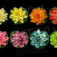 Lotus Natural Parme