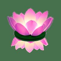 Nymphea LED Parme