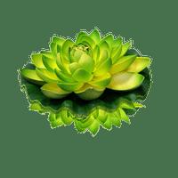 Lanterne Flottante Mariage & Fête Lotus Natural Verte (Lot De 3 Pièces)