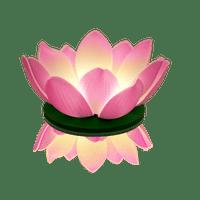 Lanternes Flottantes Mariage, Fête, Anniversaire Nymphea Led Rose (Lot De 3 Pièces)
