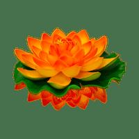 Lotus Natural Orange