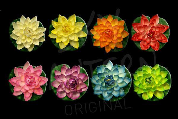 lotus-natural.jpg